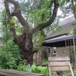 Sitzecke im Garten2